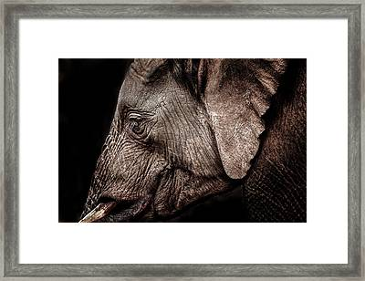 Elephant Profile Framed Print by Mike Gaudaur
