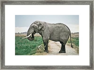 Elephant Roadblock Framed Print by Liz Leyden