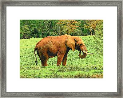 Framed Print featuring the photograph Elephant by Rodney Lee Williams