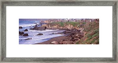 Elephant Seals On The Beach, San Luis Framed Print