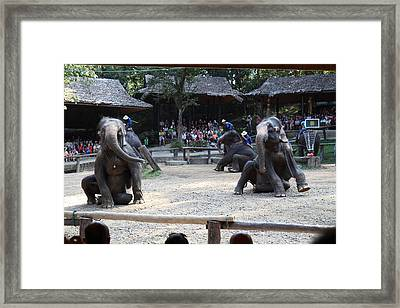 Elephant Show - Maesa Elephant Camp - Chiang Mai Thailand - 011314 Framed Print
