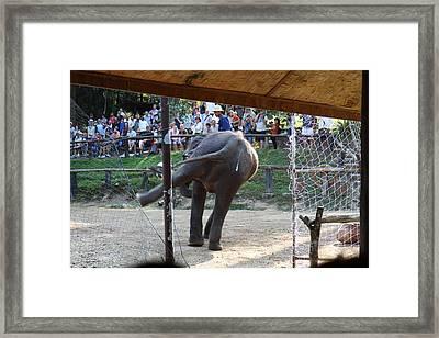 Elephant Show - Maesa Elephant Camp - Chiang Mai Thailand - 011334 Framed Print