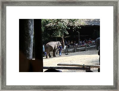 Elephant Show - Maesa Elephant Camp - Chiang Mai Thailand - 011342 Framed Print by DC Photographer