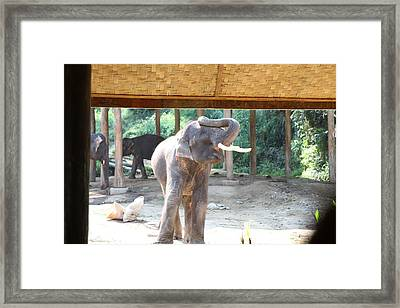 Elephant Show - Maesa Elephant Camp - Chiang Mai Thailand - 011352 Framed Print