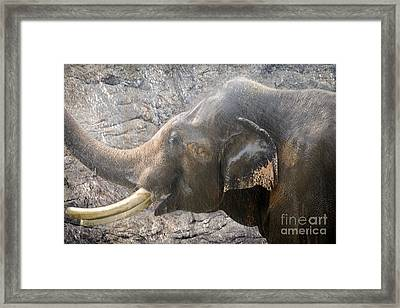 Elephant Shower Framed Print