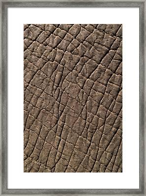 Elephant Skin, Zimbabwe Framed Print by Pete Oxford