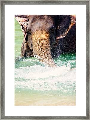 Elephant Splash Framed Print by Pati Photography