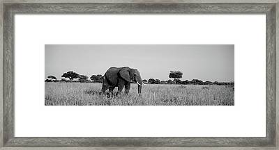 Elephant Tarangire Tanzania Africa Framed Print by Panoramic Images