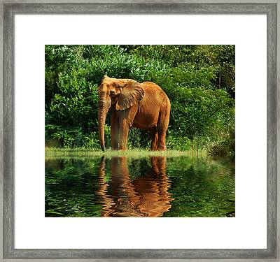 Elephant The Giant Framed Print