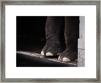 Elephant Toes Framed Print by Bob Orsillo