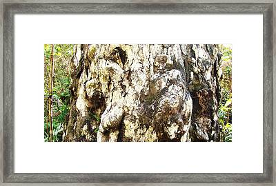 Elephant Tree Framed Print by Van Ness