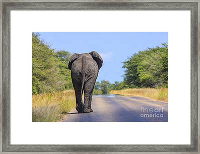 Elephant Walking Framed Print