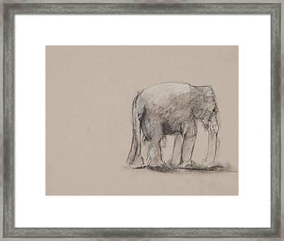 Elephant Charcoal Study #1 Framed Print