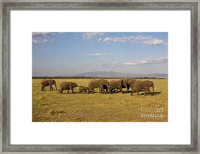 Framed Print featuring the photograph Elephants At Lake Manyara by Chris Scroggins