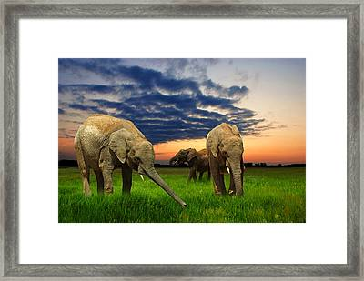 Elephants At Sunset Framed Print