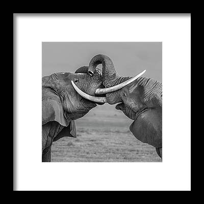 Dueling Framed Prints