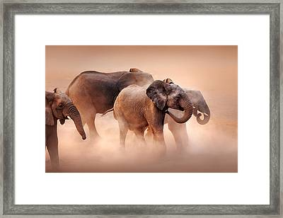 Elephants In Dust Framed Print by Johan Swanepoel