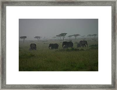 Elephants In Heavy Rain Framed Print by Menachem Ganon