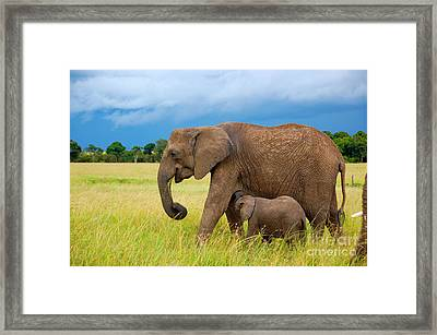 Elephants In Masai Mara Framed Print