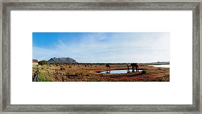 Elephants Near A Pond In Tsavo East Framed Print by Panoramic Images