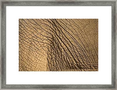 Elephants Skin Framed Print by Chris Upton