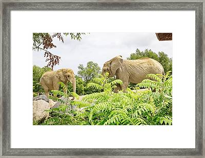 Elephants Thika And Toka At The Toronto Zoo Framed Print