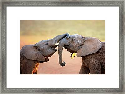 Elephants Touching Each Other Framed Print by Johan Swanepoel