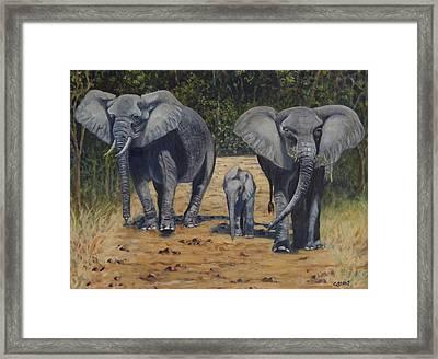 Elephants With Calf Framed Print by Caroline Street