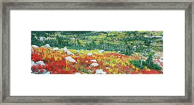 Elevated View Of Autumn Trees, North Framed Print by Panoramic Images