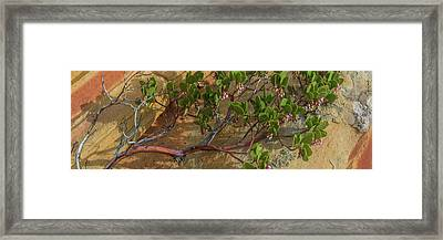 Elevated View Of Fallen Manzanita Tree Framed Print by Panoramic Images
