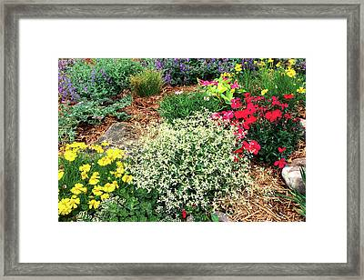 Elevated View Of Flowers Blooming Framed Print by Panoramic Images