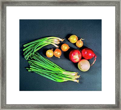 Elevated View Of Various Types Of Onions Framed Print