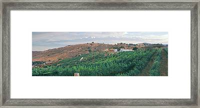 Elevated View Of Vineyard At Sunrise Framed Print
