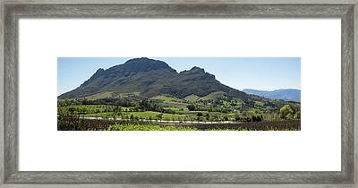 Elevated View Of Vineyard, Delaire Framed Print by Panoramic Images