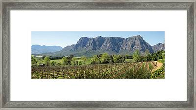 Elevated View Of Vineyard Framed Print by Panoramic Images