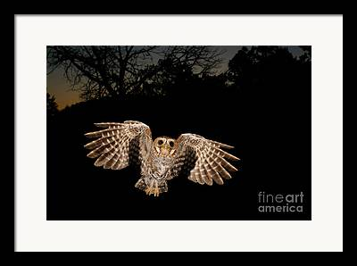 Birds In Flight At Night Framed Prints