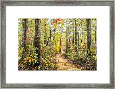 Elfin Forest Framed Print by Debra and Dave Vanderlaan