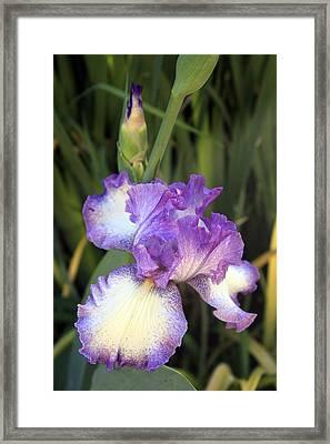 Elfreada's Iris Framed Print