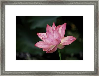Framed Print featuring the photograph Elizabeth by Cindy Lark Hartman