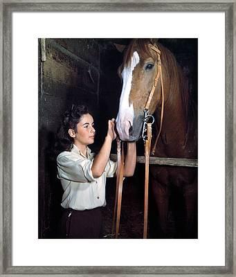 Elizabeth Taylor In National Velvet  Framed Print
