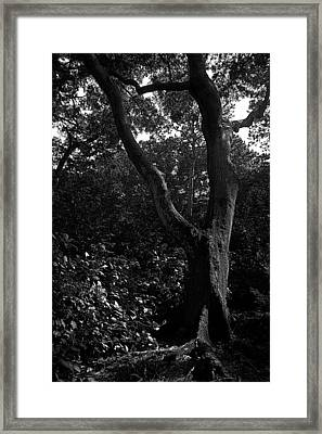 Framed Print featuring the photograph Elizabethan Gardens Tree In B And W by Greg Reed