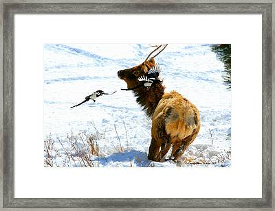 Elk And Magpie  Framed Print by Rebecca Adams