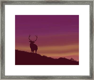 Elk At Dusk Framed Print