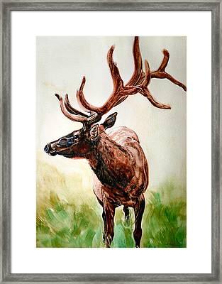Elk Framed Print by Audrey Van Tassell