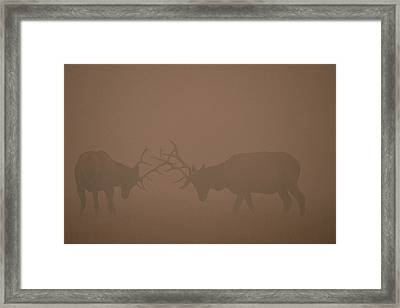 Elk Bulls Fighting In Smoke From Fire Framed Print by Michael Quinton