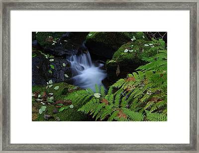Elk Creek Framed Print by Ken Dietz