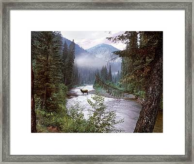 Elk Crossing 2 Framed Print by Leland D Howard