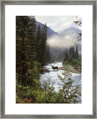Elk Crossing Framed Print