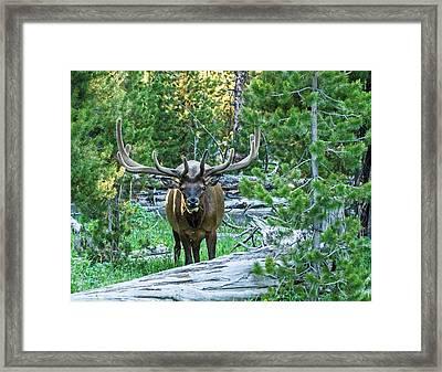 Elk Eyes Framed Print