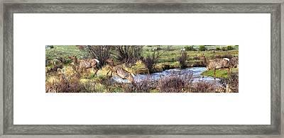 Elk In Motion Framed Print